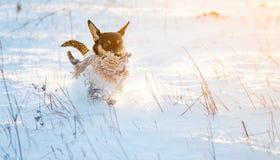 Dog run in winter snow Stock Image