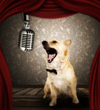 Dog in singing performance on stage Stock Photography