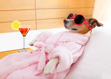 Dog spa wellness Stock Images