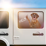 Dog Trapped In A Hot Car Stock Images