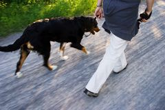 A dog walk Royalty Free Stock Photography