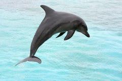 Dolphin Jump Royalty Free Stock Photo