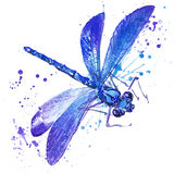 Dragonfly insect T-shirt graphics. dragonfly  illustration with splash watercolor textured background. unusual illustration waterc Stock Image