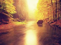 Dreamy  autumn mountain river covered by orange beech leaves. Fresh green leaves on branches above water make colorful refle Royalty Free Stock Photos