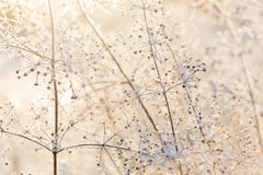 Dried frozen light plants at sunset Royalty Free Stock Photo
