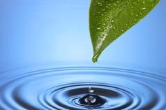 droppleafen ripples vatten Royaltyfria Foton