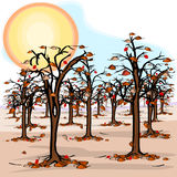 Drought in the orchard Royalty Free Stock Photography