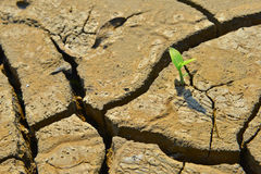 Dry cracked land Green shoot,close up,new life,new hope,heal the world Stock Photos