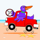 Duck driving a truck Stock Image