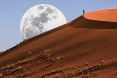 Duin dat in de Woestijn Namib loopt Royalty-vrije Stock Foto