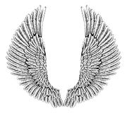 Eagle or angel wings Royalty Free Stock Images