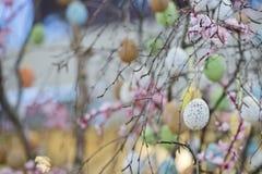 Easter egg tree Stock Images