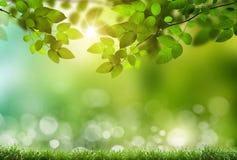 Eco自然 图库摄影