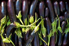 Eggplant Black Texture Royalty Free Stock Photography