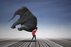 Elefante di trasporto della bella donna Immagini Stock Libere da Diritti