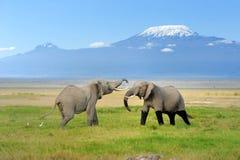 Elephant with Mount Kilimanjaro Royalty Free Stock Images