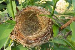 Empty bird nest Royalty Free Stock Photography