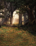 Enchanted forest scene Stock Photography