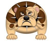English Bull Dog Spike Collar Isolated on White Stock Image