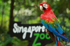 Entrance of the Singapore Zoo Royalty Free Stock Photo