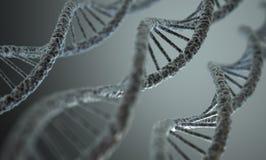 Estrutura do ADN Imagem de Stock