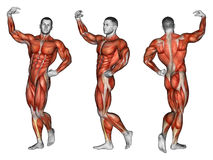 Exercising. Projection of the human body. Apollo Stock Images