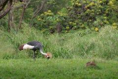 exotisk fågel Fotografering för Bildbyråer