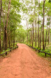 Explore the forest treks Stock Photo