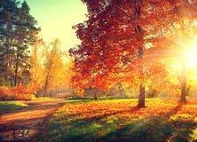 Fall. Autumn Park Stock Photography