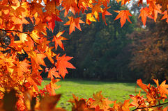 Fall leaves background Royalty Free Stock Image