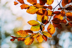 Fall leaves Stock Photography