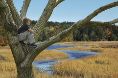 Fall Reverie Stock Photography