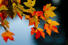 Fall Season Colors Royalty Free Stock Photography