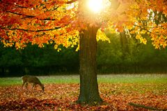 Fall Season in the Park Royalty Free Stock Image