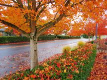 Fall view Royalty Free Stock Images