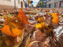 Fallen leaves in the street Stock Images