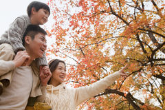 Family walking through the park in the autumn, little boy sitting on his fathers shoulders Stock Images