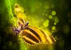Farfalla di fantasia Fotografia Stock Libera da Diritti
