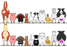 Farm animals in a row, front and back Stock Images