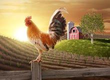Farm fresh morning Royalty Free Stock Photography