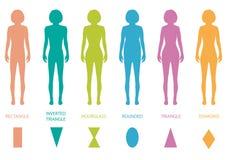 Female body types Stock Photography