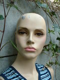 Female mannequin Stock Images