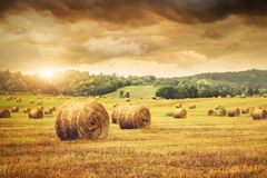 Field of freshly bales of hay Royalty Free Stock Images
