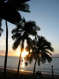 Fijian Beach Palms Royalty Free Stock Photography