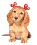 Filhote de cachorro do Valentim Imagens de Stock Royalty Free