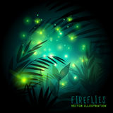 Fireflies and Forest at Night Royalty Free Stock Photography