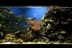 Fish tank Royalty Free Stock Photography