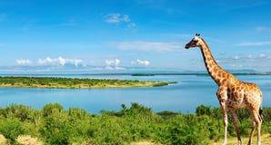 Fiume di Nilo, Uganda Fotografia Stock
