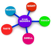 Five human senses Stock Images