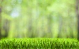 Grön bakgrund för gräsabstrakt begreppnatur Arkivfoto